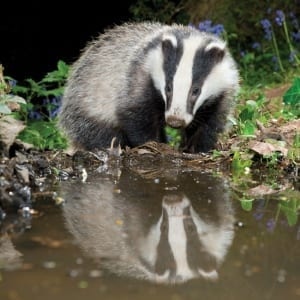 DC55 Badger Reflecting-0