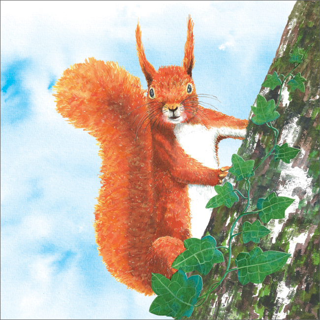 SA111 Red Squirrel-0