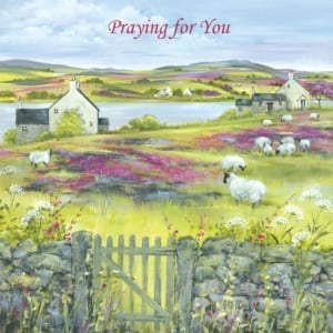 Sheep Moor Yorkshire Country Diane Demirci Praying Christian